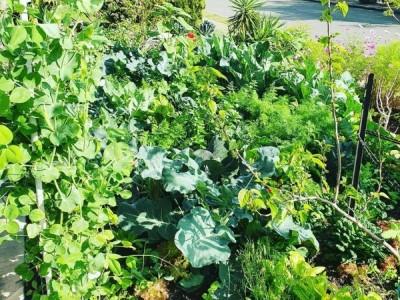 Veggie Verge Garden